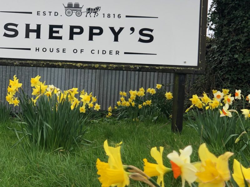 Exploring Exmoor – Birthday visit to Sheppy's House of Cider