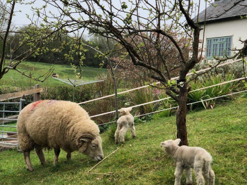 Lockdown, Life & Lambs